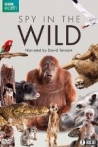 Watch Spy in the Wild Online for Free